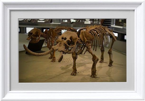 museo-archeologico-numana